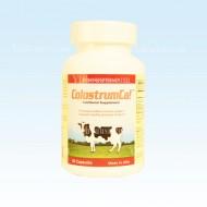 GB60 增強免疫力之寶 - 牛初乳 60粒