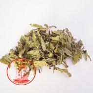 MD02 薄荷 [1磅]