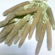 MD73 玉米芯 (1磅)